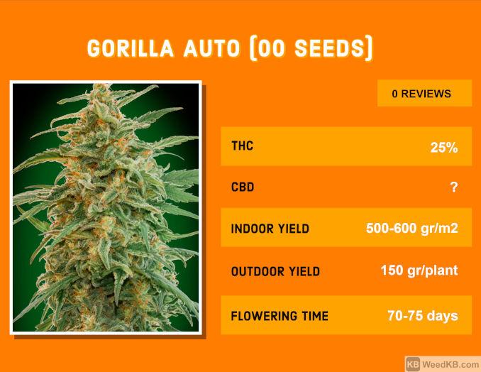 gorilla auto 00 seeds