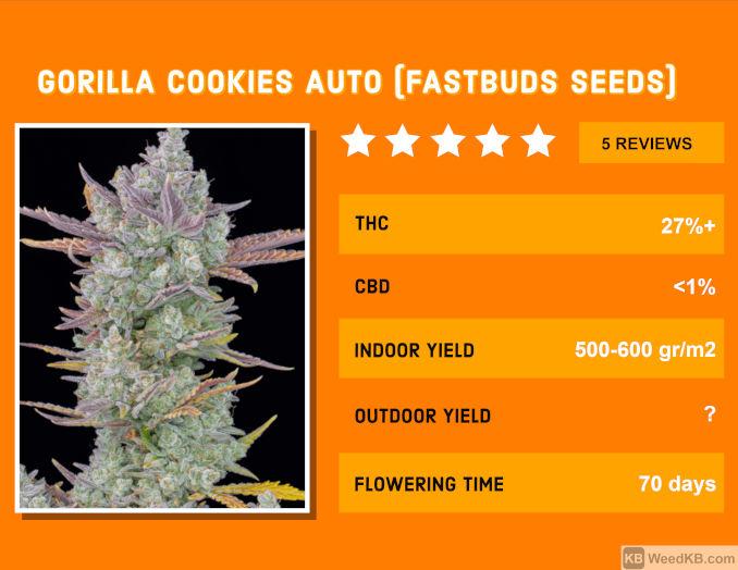 gorilla cookies auto