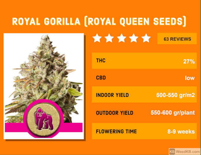 royal gorilla glue strain review