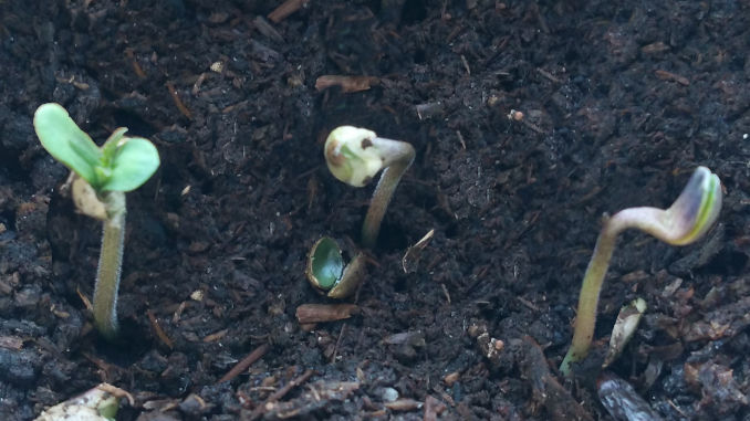 pot seedlings no shell film