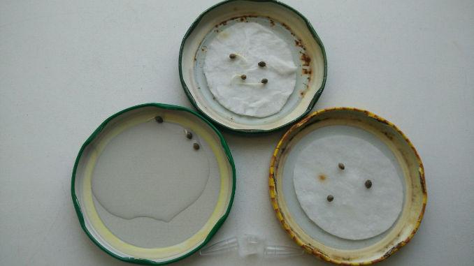 weed seedling germination basic methods