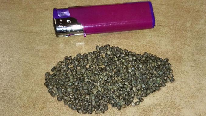 feminized seeds make