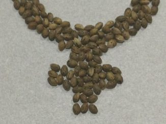 feminized seeds symbol