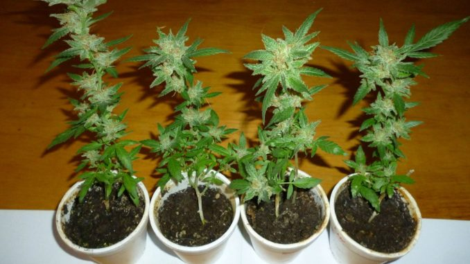 12 and 12 from seeds solo cups