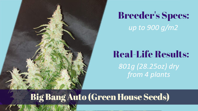 autoflower xxl strains - Big Bang Auto Green House Seeds