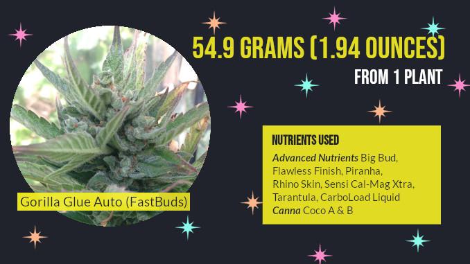 glue auto fastbuds with CANNA nutrients
