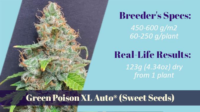 Green Poison XL Auto one of true autoflower XXL strains