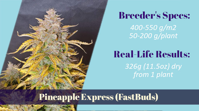 Pineapple Express FastBuds autoflower xxl yield 326g