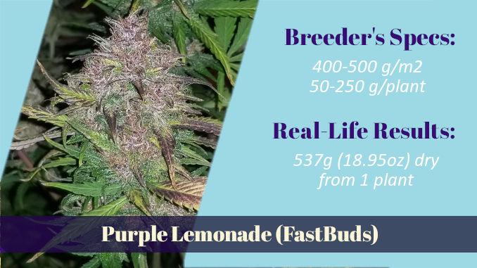 Purple Lemonade FastBuds autoflower XXL wonder in DWC