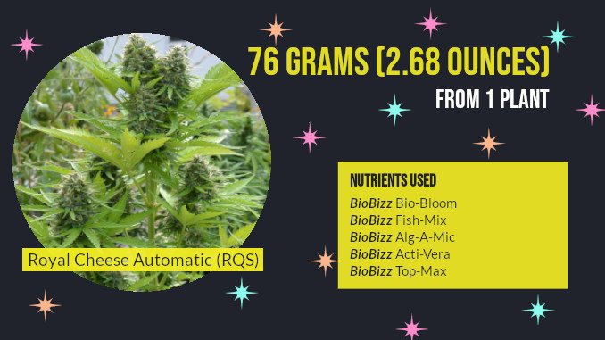 autoflower outdoor nutrients biobizz