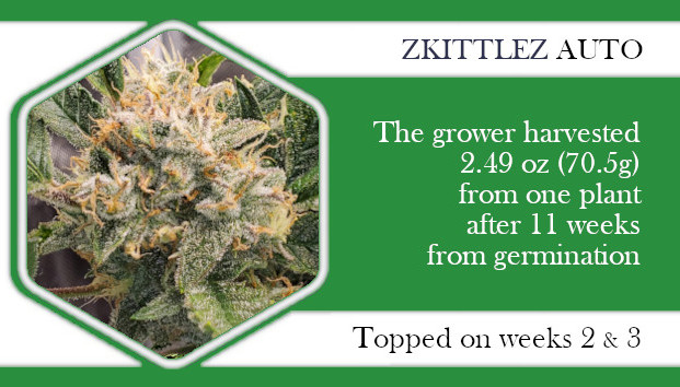 Zkittlez Auto topped on weeks 2 and 3
