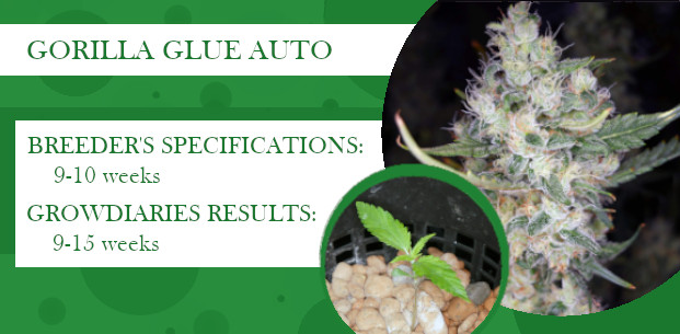 how long does gorilla glue auto take