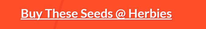 Buy Autoflower Gorilla Glue seeds at Herbies Head Shop